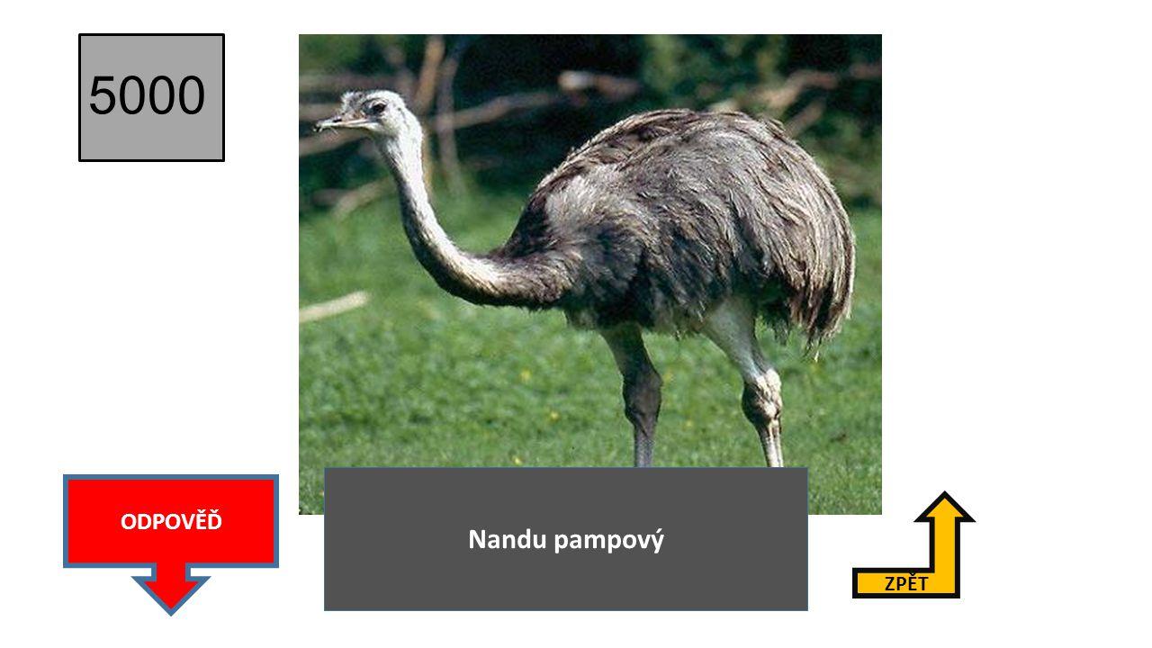 4000 ZPĚT ODPOVĚĎ Emu hnědý
