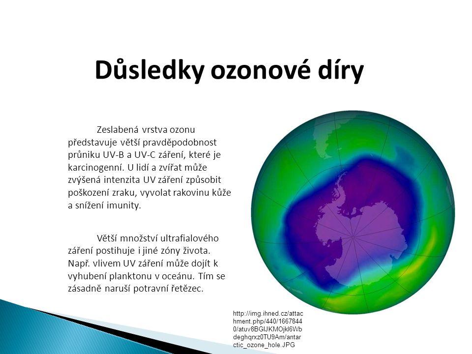 Důsledky ozonové díry  Zeslabená vrstva ozonu představuje větší pravděpodobnost průniku UV-B a UV-C záření, které je karcinogenní. U lidí a zvířat mů