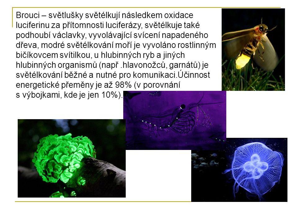 Brouci – světlušky světélkují následkem oxidace luciferinu za přítomnosti luciferázy, světélkuje také podhoubí václavky, vyvolávající svícení napadeného dřeva, modré světélkování moří je vyvoláno rostlinným bičíkovcem svítilkou, u hlubinných ryb a jiných hlubinných organismů (např.hlavonožců, garnátů) je světélkování běžné a nutné pro komunikaci.Účinnost energetické přeměny je až 98% (v porovnání s výbojkami, kde je jen 10%).