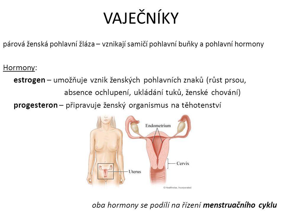 VAJEČNÍKY párová ženská pohlavní žláza – vznikají samičí pohlavní buňky a pohlavní hormony Hormony: estrogen – umožňuje vznik ženských pohlavních znak