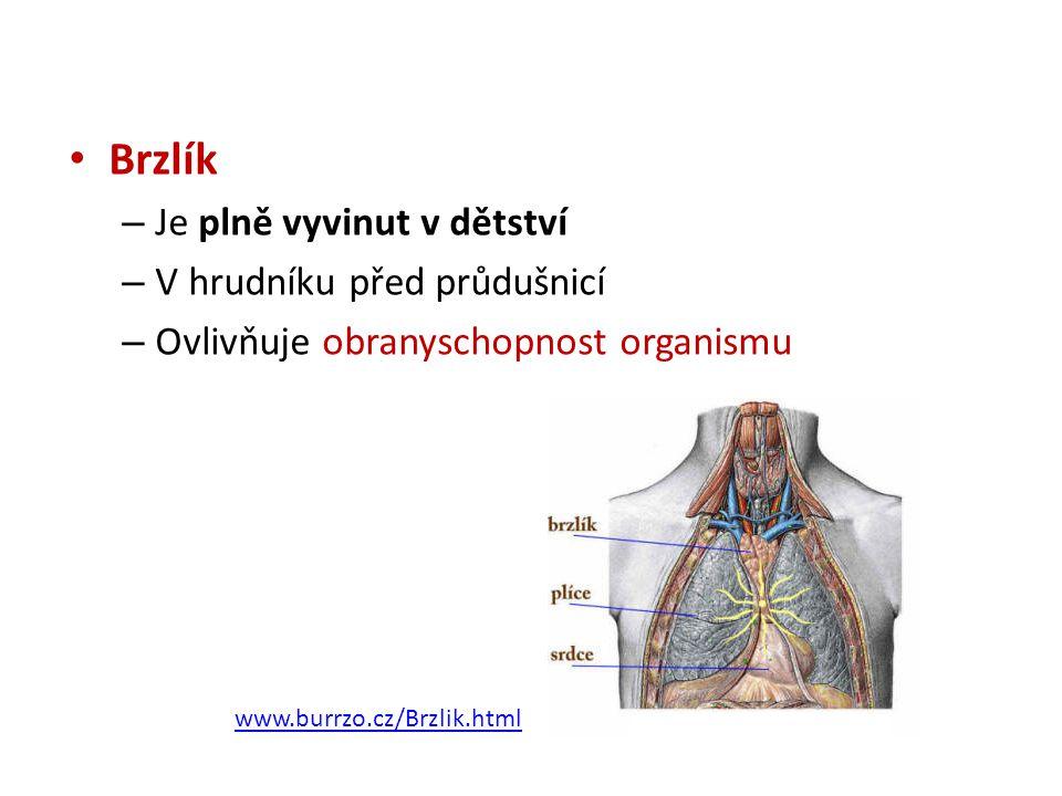 • Brzlík – Je plně vyvinut v dětství – V hrudníku před průdušnicí – Ovlivňuje obranyschopnost organismu www.burrzo.cz/Brzlik.html