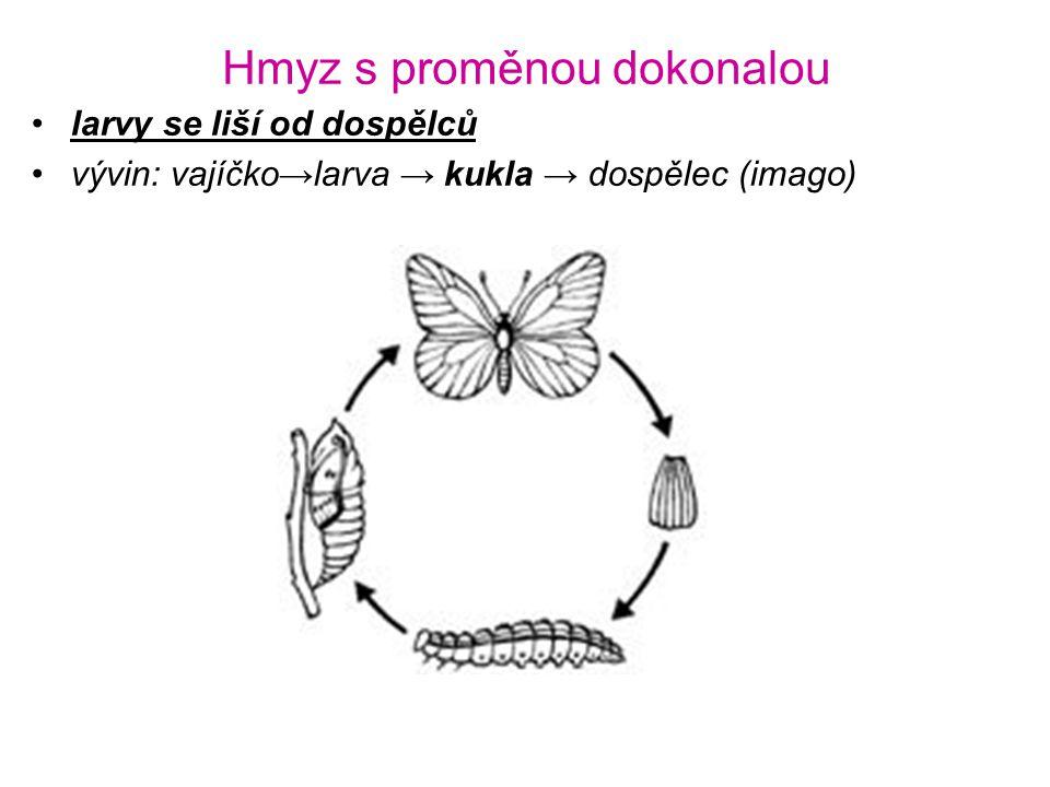 Hmyz s proměnou dokonalou •larvy se liší od dospělců •vývin: vajíčko→larva → kukla → dospělec (imago)