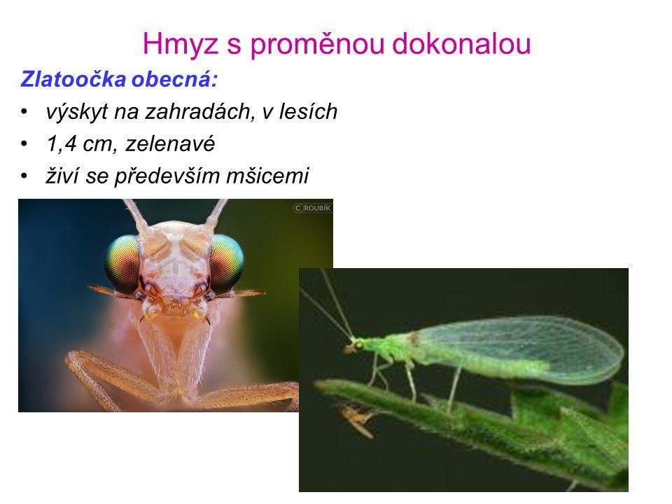 Hmyz s proměnou dokonalou Zlatoočka obecná: •výskyt na zahradách, v lesích •1,4 cm, zelenavé •živí se především mšicemi