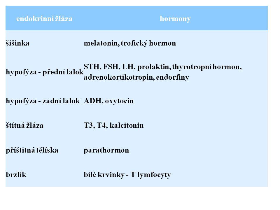 endokrinní žlázahormony šišinkamelatonin, trofický hormon hypofýza - přední lalok STH, FSH, LH, prolaktin, thyrotropní hormon, adrenokortikotropin, endorfiny hypofýza - zadní lalokADH, oxytocin štítná žlázaT3, T4, kalcitonin příštitná tělískaparathormon brzlíkbílé krvinky - T lymfocyty