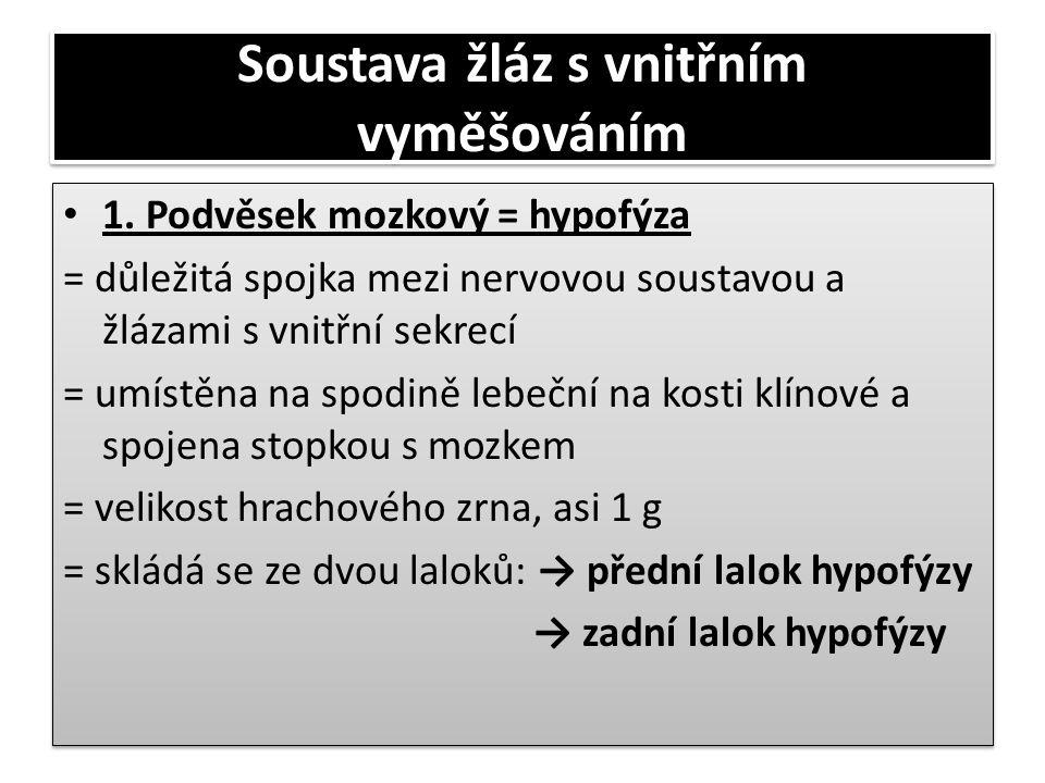 Soustava žláz s vnitřním vyměšováním • 1. Podvěsek mozkový = hypofýza = důležitá spojka mezi nervovou soustavou a žlázami s vnitřní sekrecí = umístěna