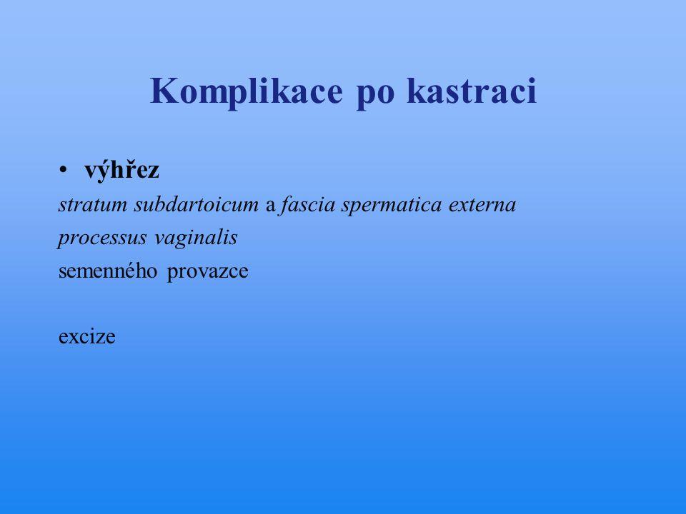 Komplikace po kastraci •výhřez stratum subdartoicum a fascia spermatica externa processus vaginalis semenného provazce excize