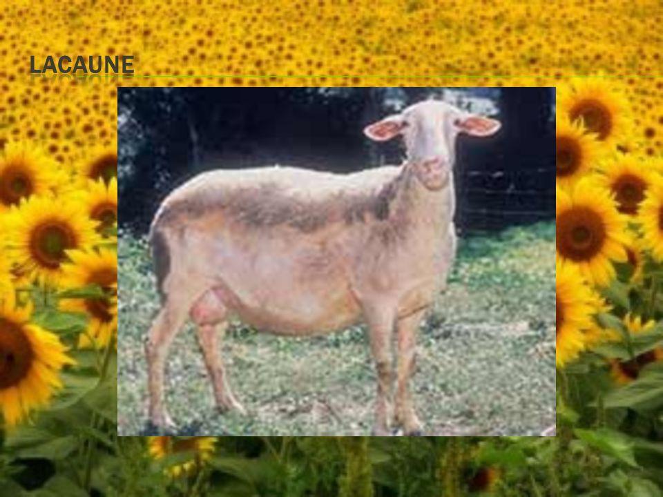  Existuje řada plemen,která mají chovatelé v chovu pro svůj zvláštní až exotický exteriér nebo velikost.
