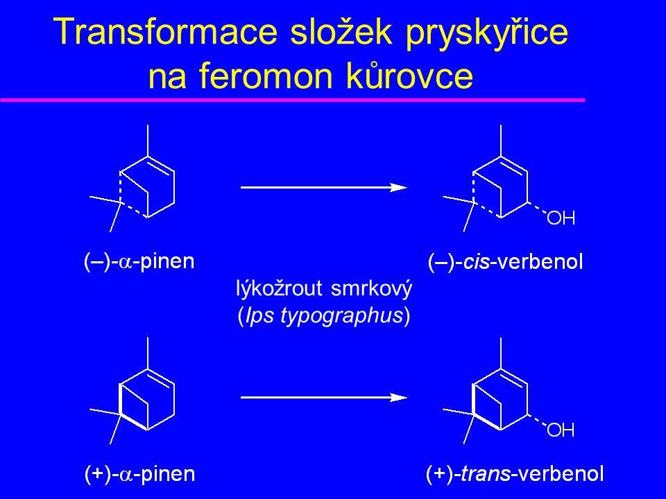 Transformace složek pryskyřice na feromon kůrovce lýkožrout smrkový (Ips typographus)