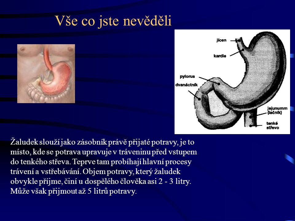 Popis žaludku