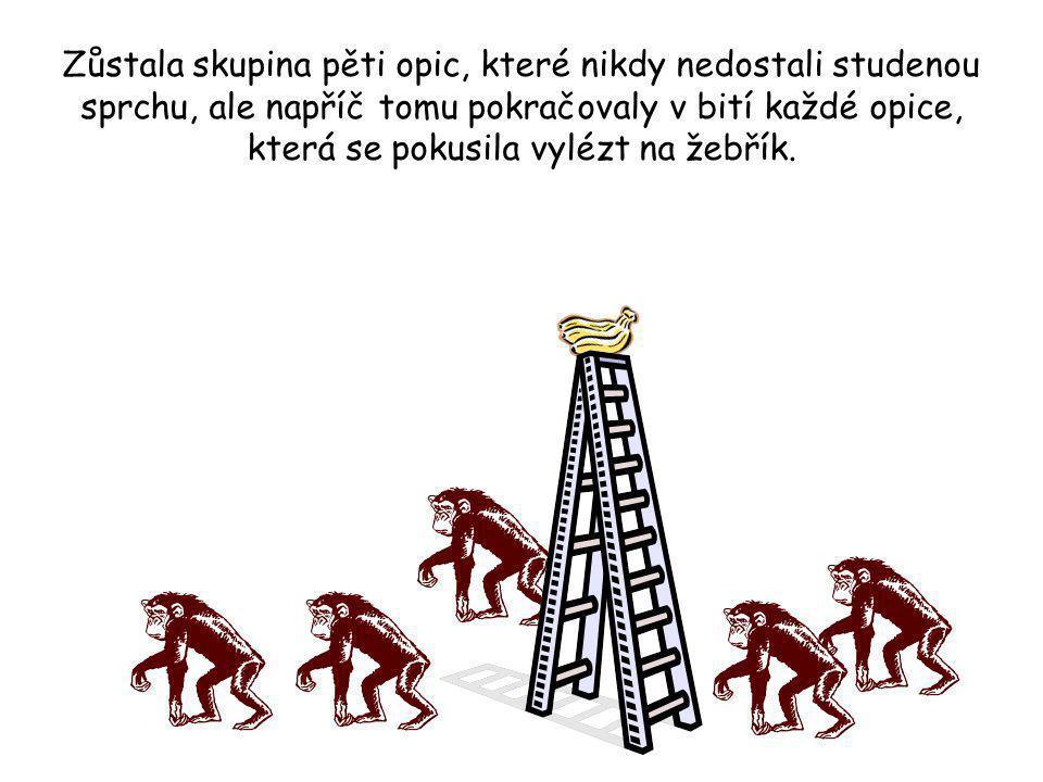 Zůstala skupina pěti opic, které nikdy nedostali studenou sprchu, ale napříč tomu pokračovaly v bití každé opice, která se pokusila vylézt na žebřík.