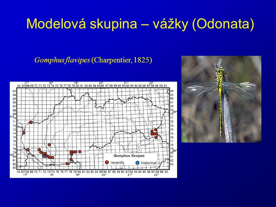 Modelová skupina – vážky (Odonata) Gomphus flavipes (Charpentier, 1825)