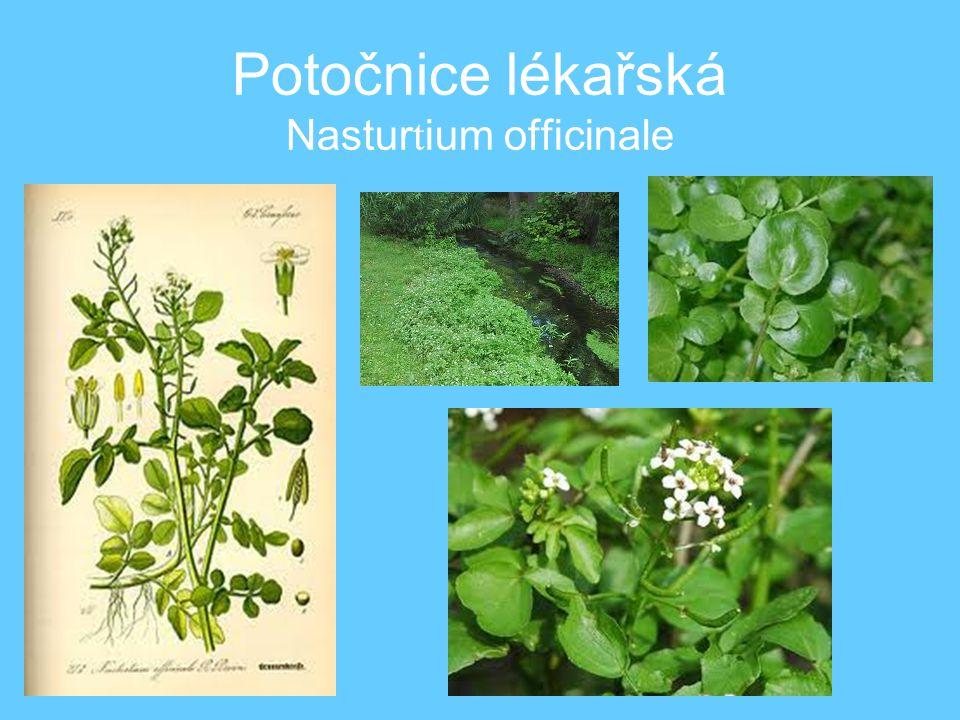 •Listy - po celou zimu až do května na salát, posypka do jídel, do pomazánek.