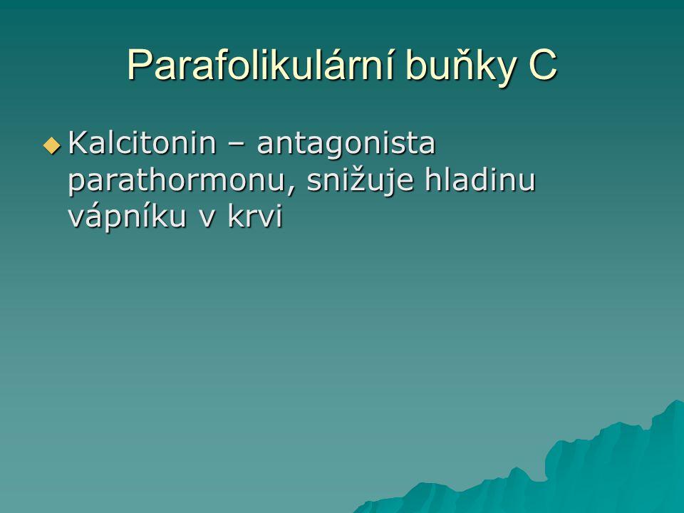 Parafolikulární buňky C  Kalcitonin – antagonista parathormonu, snižuje hladinu vápníku v krvi