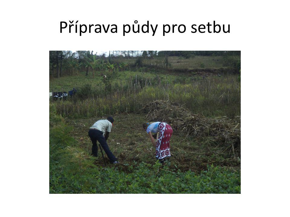 Příprava půdy pro setbu
