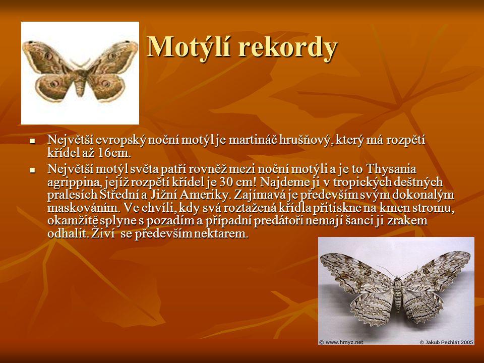 Motýlí rekordy  Největší evropský noční motýl je martináč hrušňový, který má rozpětí křídel až 16cm.  Největší motýl světa patří rovněž mezi noční m