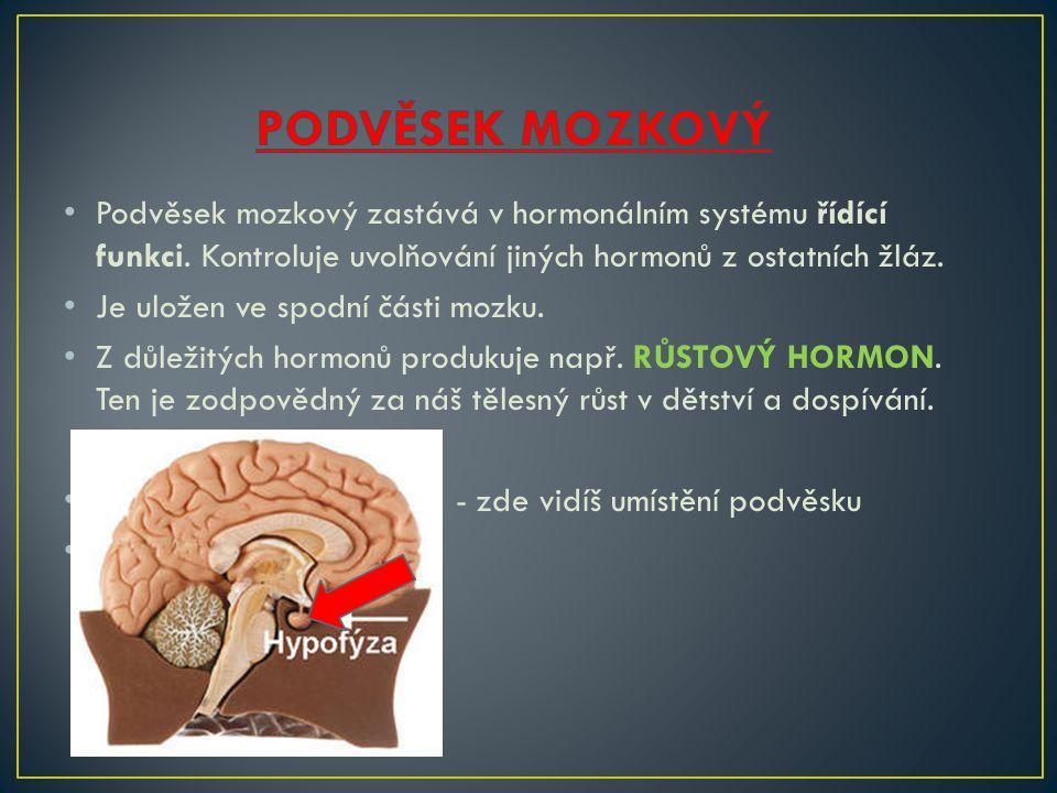 • Podvěsek mozkový zastává v hormonálním systému řídící funkci.