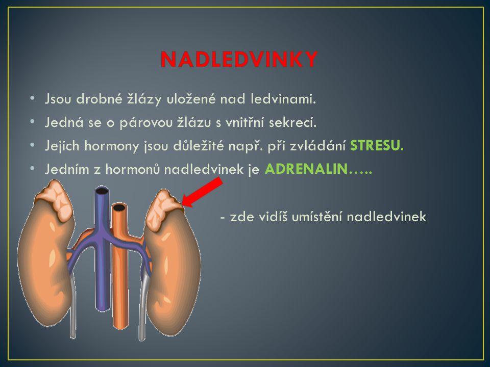 • Jsou drobné žlázy uložené nad ledvinami.• Jedná se o párovou žlázu s vnitřní sekrecí.