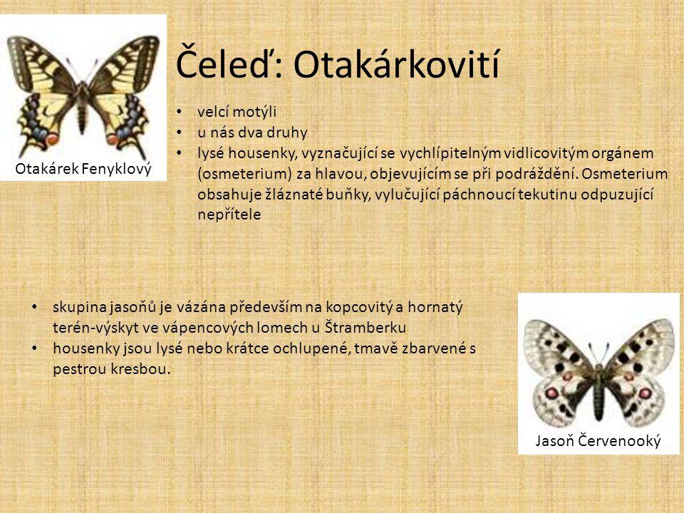 Čeleď: Otakárkovití Otakárek Fenyklový Jasoň Červenooký • velcí motýli • u nás dva druhy • lysé housenky, vyznačující se vychlípitelným vidlicovitým o