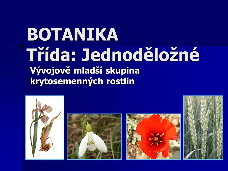 BOTANIKA Třída: Jednoděložné Vývojově mladší skupina krytosemenných rostlin