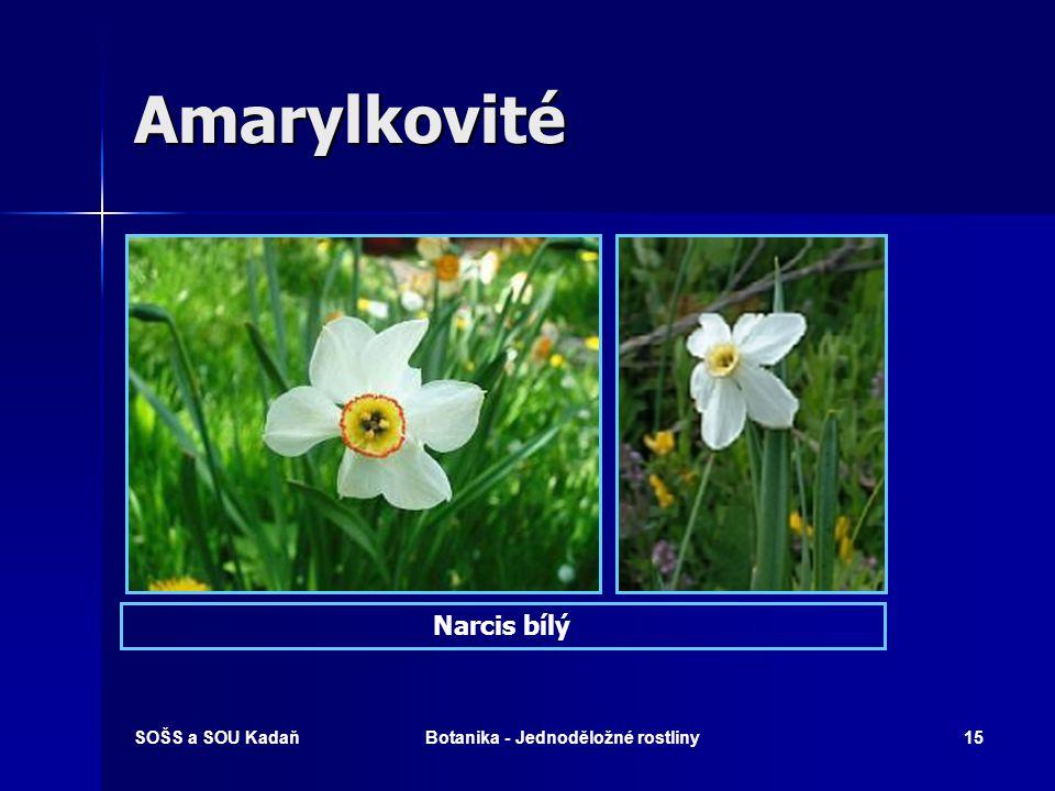 SOŠS a SOU KadaňBotanika - Jednoděložné rostliny14 Amarylkovité Bledule jarní