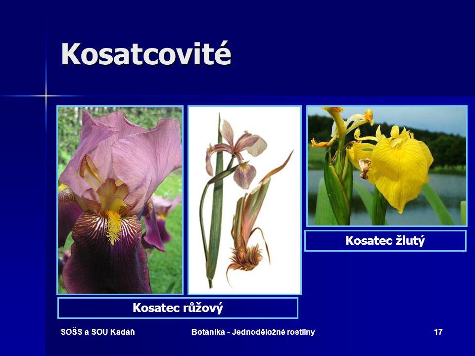 SOŠS a SOU KadaňBotanika - Jednoděložné rostliny16 Kosatcovité  Vytrvalé byliny s oddenky, hlízami nebo cibulemi.  Listy kopinaté, dvouřadé.  Květe
