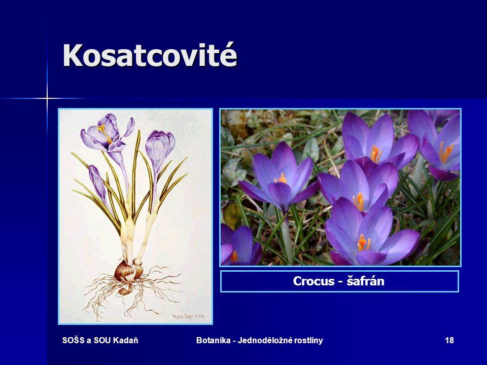 SOŠS a SOU KadaňBotanika - Jednoděložné rostliny17 Kosatcovité Kosatec růžový Kosatec žlutý