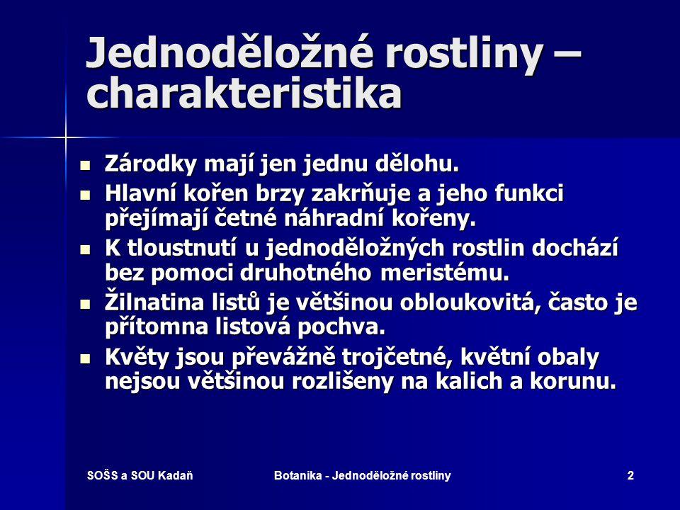 SOŠS a SOU KadaňBotanika - Jednoděložné rostliny22 Šáchorovité  Byliny trávovitého vzhledu.