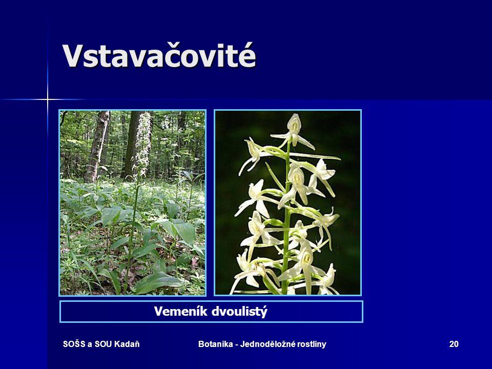 SOŠS a SOU KadaňBotanika - Jednoděložné rostliny19 Vstavačovité (Orchidaceae)  Zástupci (chráněné!): Vstavač kukačka, vemeník dvoulistý, vanilkovník