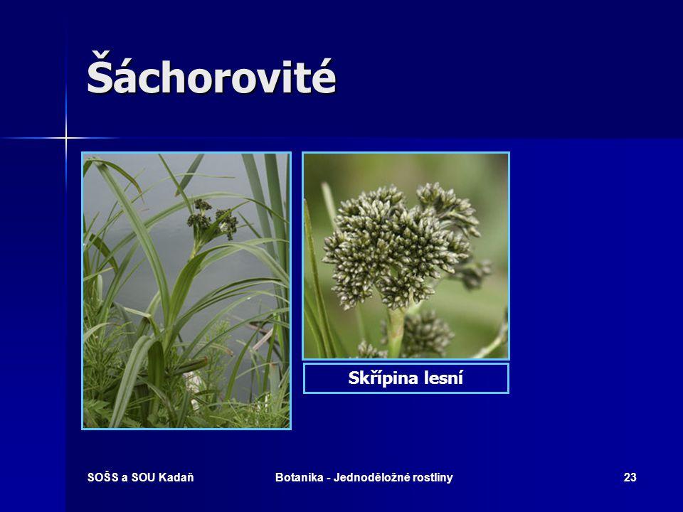 SOŠS a SOU KadaňBotanika - Jednoděložné rostliny22 Šáchorovité  Byliny trávovitého vzhledu.  Stonek bezlistý – trojhranný.  Listy čárkovité.  Květ