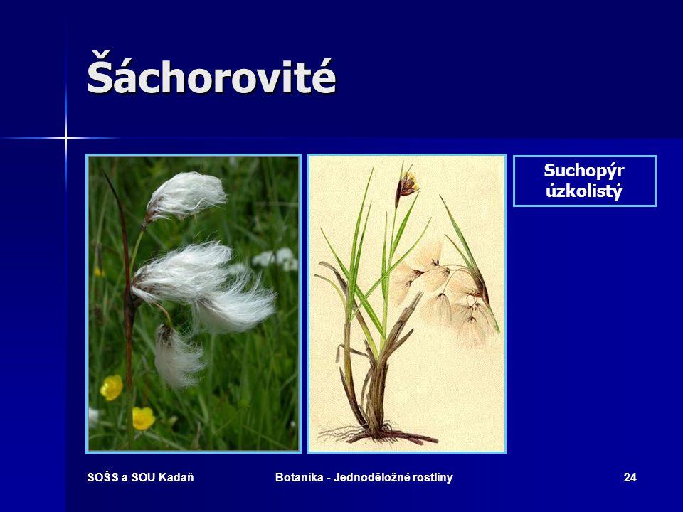 SOŠS a SOU KadaňBotanika - Jednoděložné rostliny23 Šáchorovité Skřípina lesní