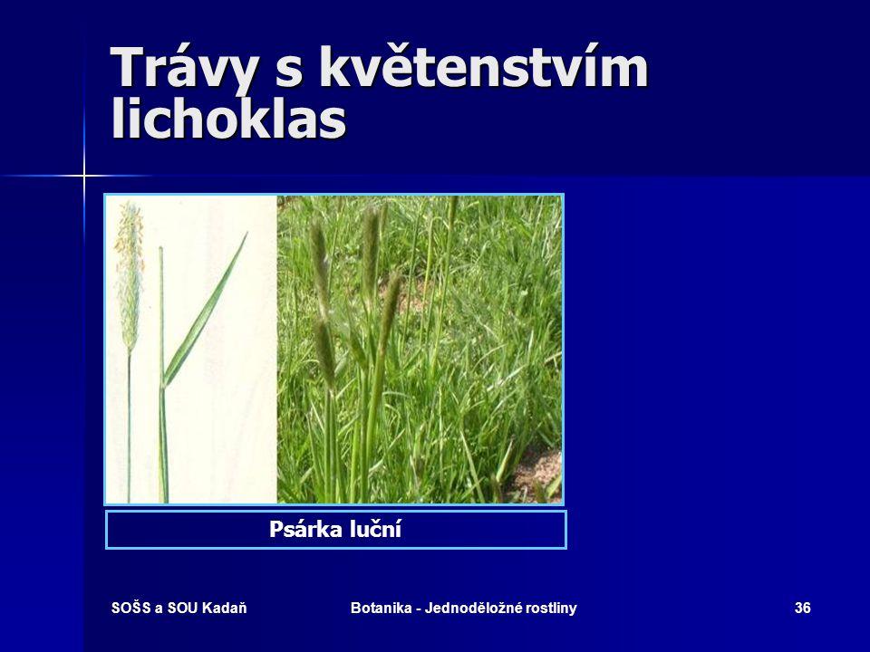 SOŠS a SOU KadaňBotanika - Jednoděložné rostliny35 Trávy s květenstvím lichoklas Trávy s květenstvím lichoklas  Psárka luční  Bojínek luční  Tomka