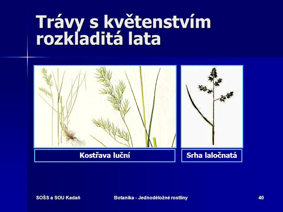 SOŠS a SOU KadaňBotanika - Jednoděložné rostliny39 Trávy s květenstvím rozkladitá lata   Psineček bílý   Lesklice rákosovitá   Srha laločnatá 