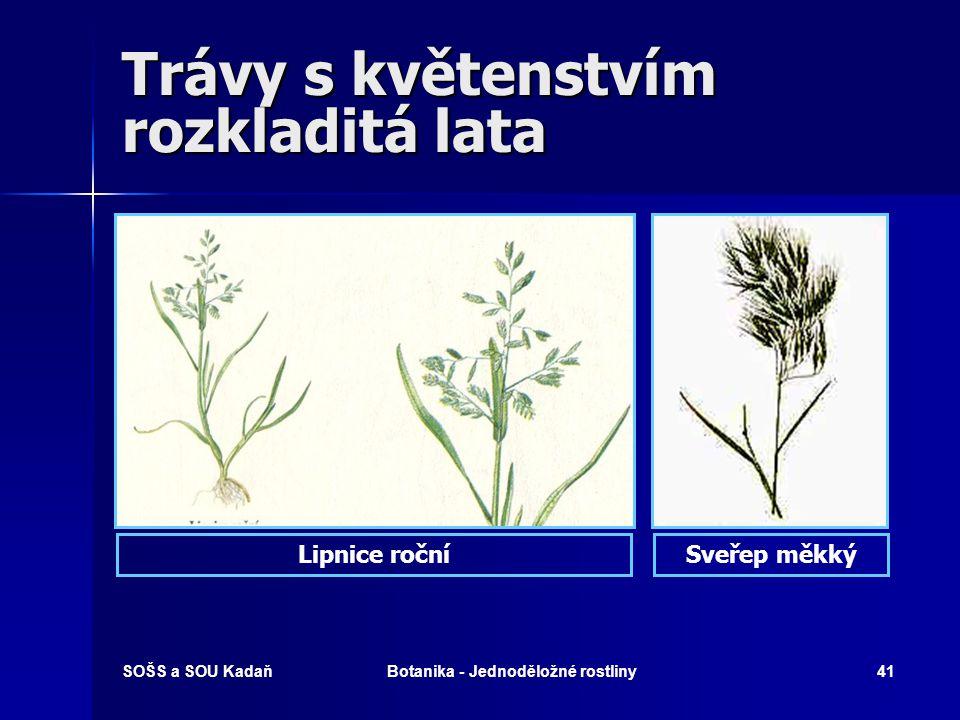 SOŠS a SOU KadaňBotanika - Jednoděložné rostliny40 Trávy s květenstvím rozkladitá lata Kostřava lučníSrha laločnatá