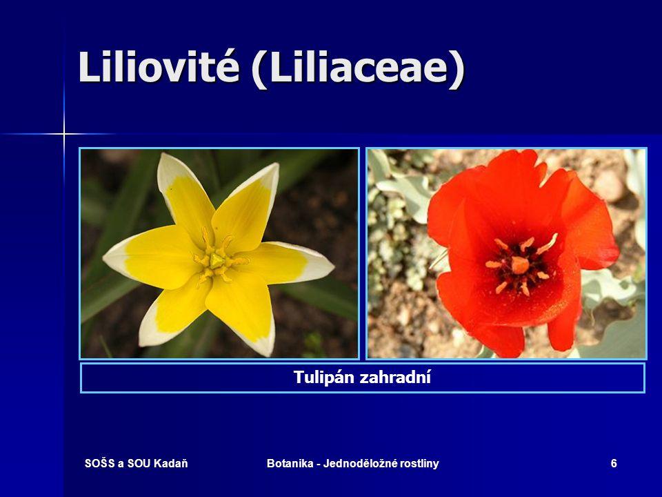 SOŠS a SOU KadaňBotanika - Jednoděložné rostliny36 Trávy s květenstvím lichoklas Psárka luční