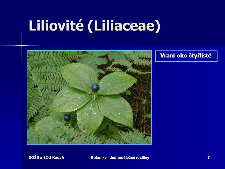 SOŠS a SOU KadaňBotanika - Jednoděložné rostliny6 Liliovité (Liliaceae) Tulipán zahradní
