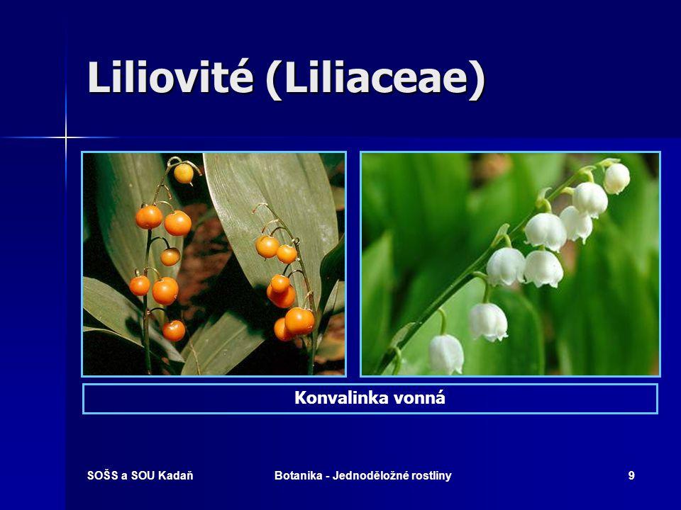 SOŠS a SOU KadaňBotanika - Jednoděložné rostliny19 Vstavačovité (Orchidaceae)  Zástupci (chráněné!): Vstavač kukačka, vemeník dvoulistý, vanilkovník plocholistý, prstnatec májový, pětiprstka.