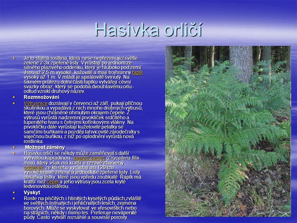  Je to statná rostlina, která nese nepřezimující světle zelené 2-3x zpeřené listy.