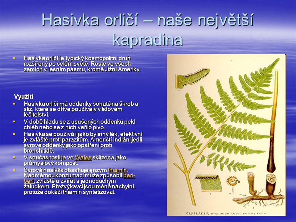 Hasivka orličí – naše největší kapradina  Hasivka orličí je typický kosmopolitní druh rozšířený po celém světě.
