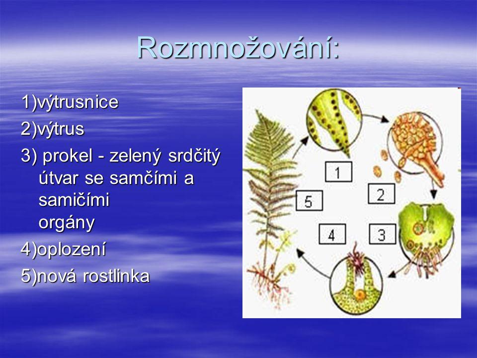 Rozmnožování: 1)výtrusnice 2)výtrus 3) prokel - zelený srdčitý útvar se samčími a samičími orgány 3) prokel - zelený srdčitý útvar se samčími a samičími orgány 4)oplození 5)nová rostlinka 5)nová rostlinka