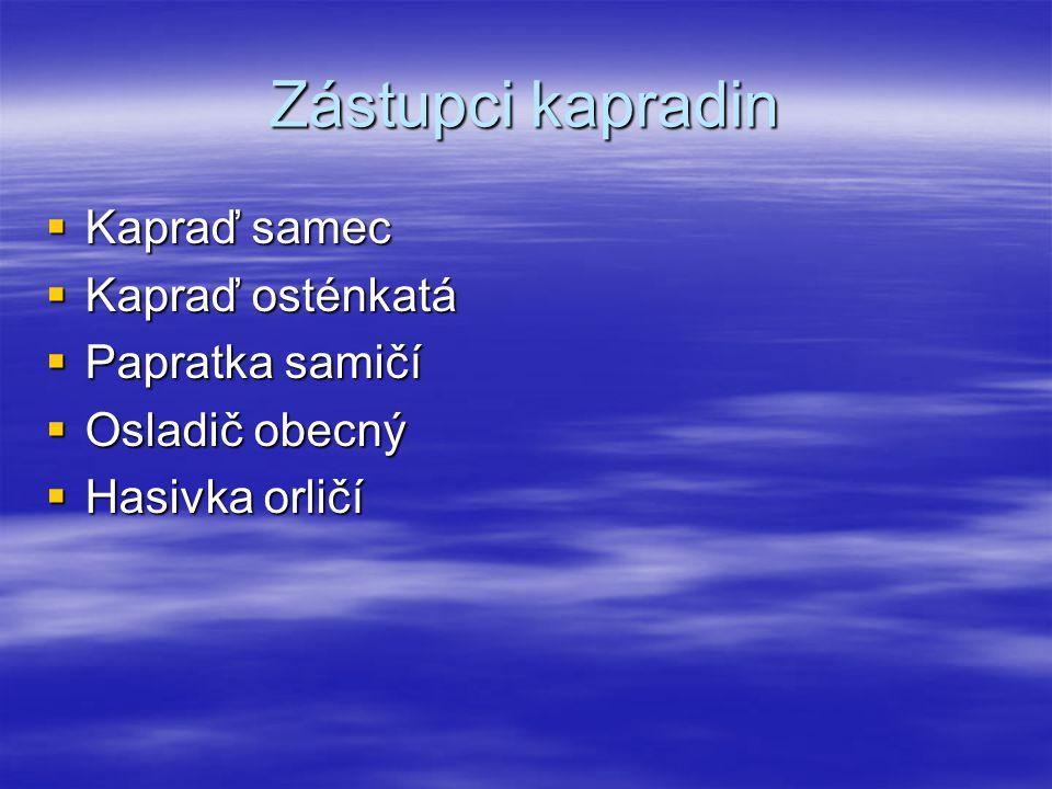 Zástupci kapradin  Kapraď samec  Kapraď osténkatá  Papratka samičí  Osladič obecný  Hasivka orličí