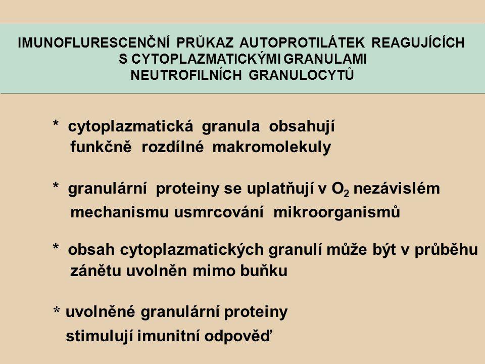 IMUNOFLURESCENČNÍ PRŮKAZ AUTOPROTILÁTEK REAGUJÍCÍCH S CYTOPLAZMATICKÝMI GRANULAMI NEUTROFILNÍCH GRANULOCYTŮ * cytoplazmatická granula obsahují funkčně