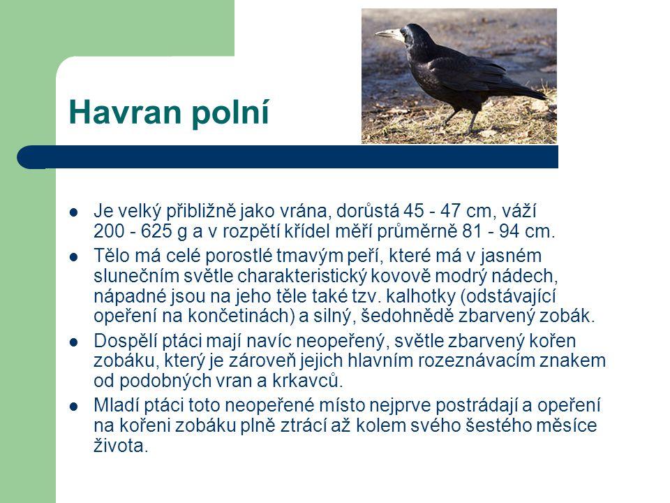 Mezi krkavcovité patří:  Havran polní  Kavka obecná  Krkavec velký  Sojka obecná  Straka obecná  Vrána černá  Vrána šedá  Ořešník