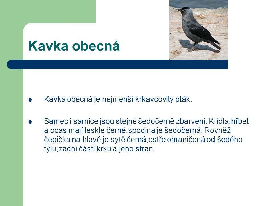 Havran polní  Je velký přibližně jako vrána, dorůstá 45 - 47 cm, váží 200 - 625 g a v rozpětí křídel měří průměrně 81 - 94 cm.  Tělo má celé porostl