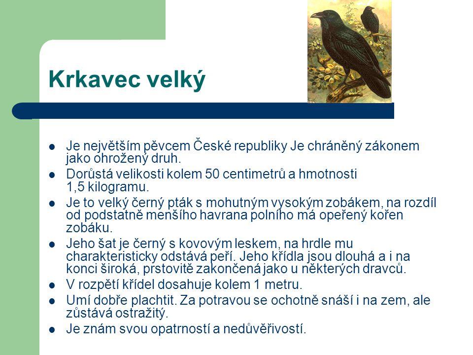 Kavka obecná  Kavka obecná je nejmenší krkavcovitý pták.  Samec i samice jsou stejně šedočerně zbarveni. Křídla,hřbet a ocas mají leskle černé,spodi
