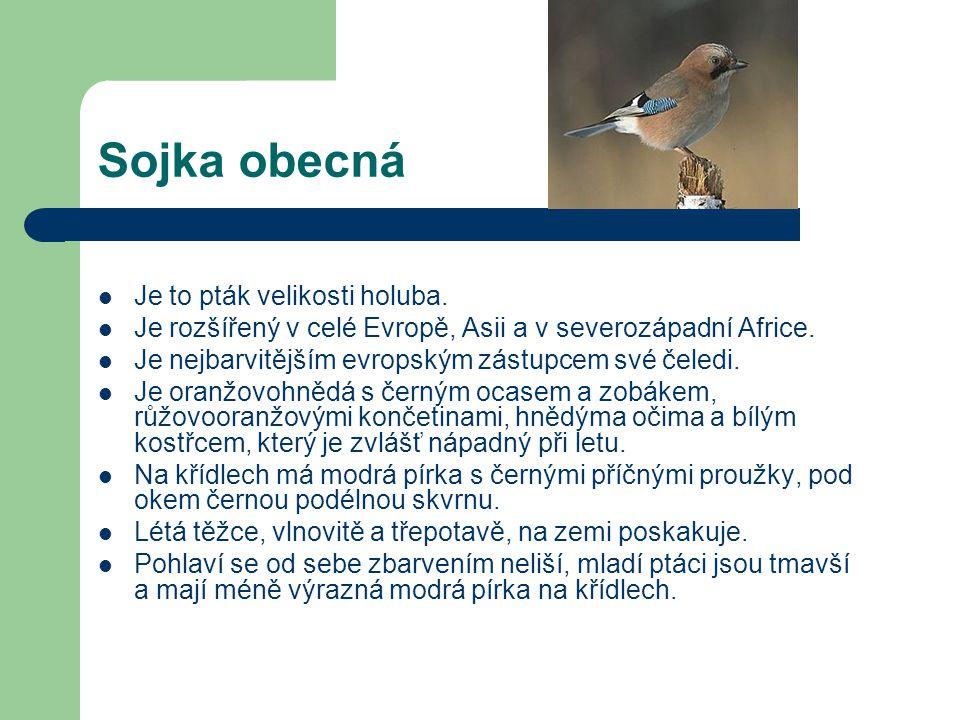 Krkavec velký  Je největším pěvcem České republiky Je chráněný zákonem jako ohrožený druh.  Dorůstá velikosti kolem 50 centimetrů a hmotnosti 1,5 ki