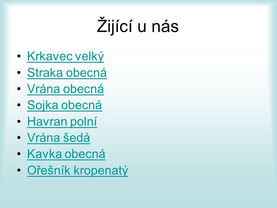 Druhy krkavcovitých •Corvus •Sojka obecná (Garrulus) •Sojka (Perisoreus) •Straka obecná (Pica) •Ořešník (Nucifraga) •Kavče (Pyrrhocorax) •(Cyanocitta) •(Podoces) •(Calocitta) •(Cyanocorax) •Kraska (Cissa) •(Urocissa) •(Cyanopica) •(Dendrocitta)