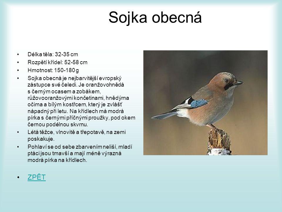Vrána obecná •Délka těla: 45 - 50 cm •Rozpětí těla: 90 - 100 cm •Hmotnost: 600 - 700 g •Vrána obecná je pěvec se silným tělem, silným a zašpičatělým zobákem a poměrně krátkým ocasem s mírně okrouhlou špičkou.