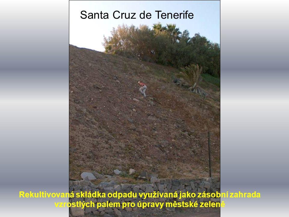Santa Cruz de Tenerife Rekultivovaná skládka odpadu využívaná jako zásobní zahrada vzrostlých palem pro úpravy městské zeleně