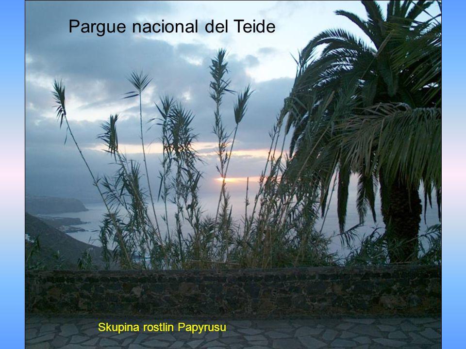 Pargue nacional del Teide Skupina rostlin Papyrusu