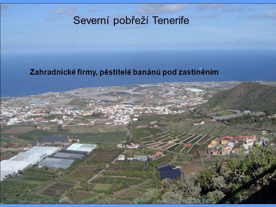 Severní pobřeží Tenerife Zahradnické firmy, pěstitelé banánů pod zastíněním